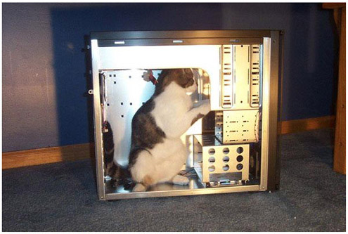 a cat is sat in a pc